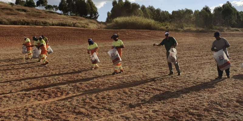 Serra Azul - início do plantio de Celebration em fairways